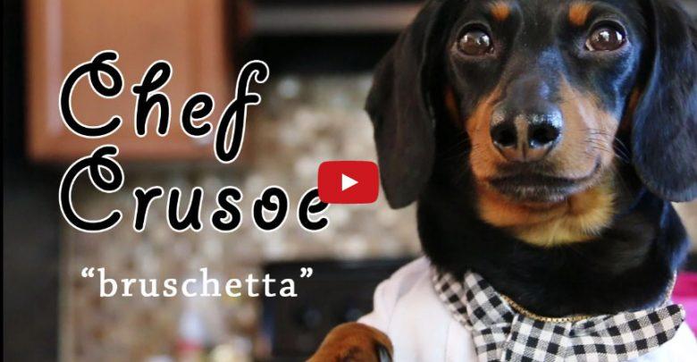 Cane che cucina? Chef Crusoe incanta il web (Video)