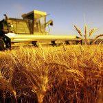 IMU Terreni Agricoli 2015: Calcolo, Scadenza ed Esenzioni