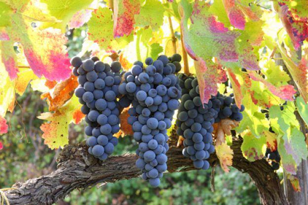 Consorzio di tutela dei vini d'Irpinia: tappa a Mirabella Eclano