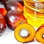 Olio di palma: tutto quello che c'è da sapere
