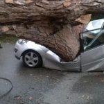 Albero caduto a Roma oggi, due Morti sulla Laurentina