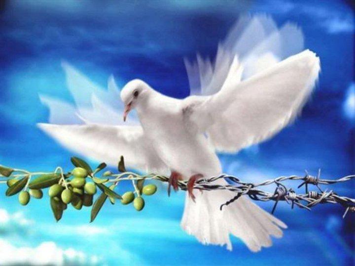 Domenica delle Palme 2016: Frasi e Immagini per Auguri 2