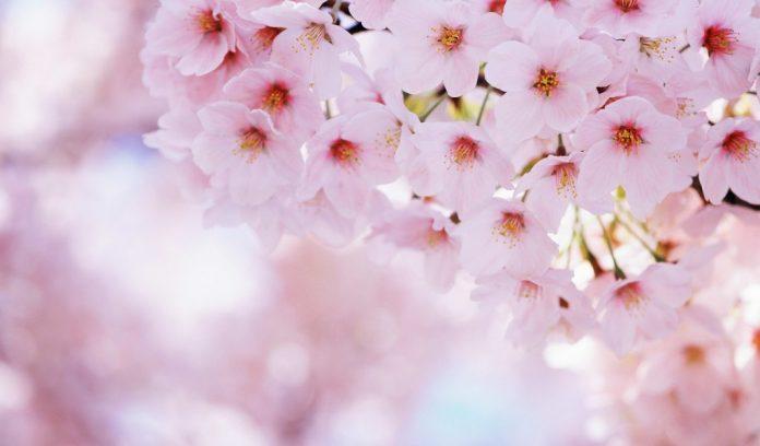 Equinozio di Primavera 2016, Quando arriva? Il 20 Marzo cambia stagione