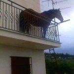 Cavallo sul Balcone di Casa a Pagani (Salerno)