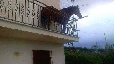 Photo of Cavallo sul Balcone di Casa a Pagani (Salerno)