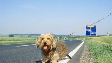 Numero Telefono Cani Abbandonati in Autostrada: Ma è una Bufala