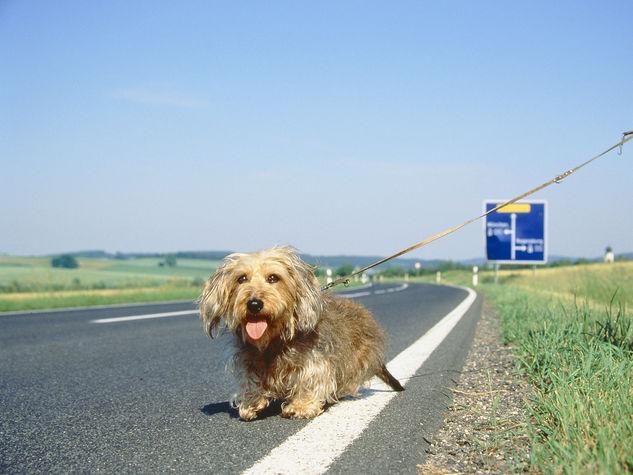 Numero Telefono Cani Abbandonati in Autostrada: Ma è una Bufala – Newsly