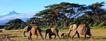 Imprenditore di origini Irpine Ucciso in Kenya