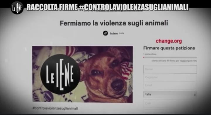 Servizio Nina Palmieri contro la violenza sugli animali a Le Iene (video 6 novembre) 2