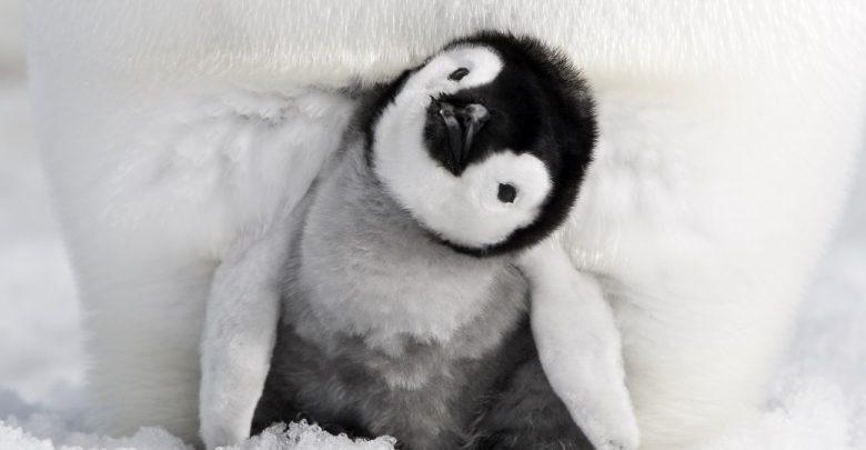 La marcia dei pinguini- Il richiamo: Data Uscita, Trama e Trailer