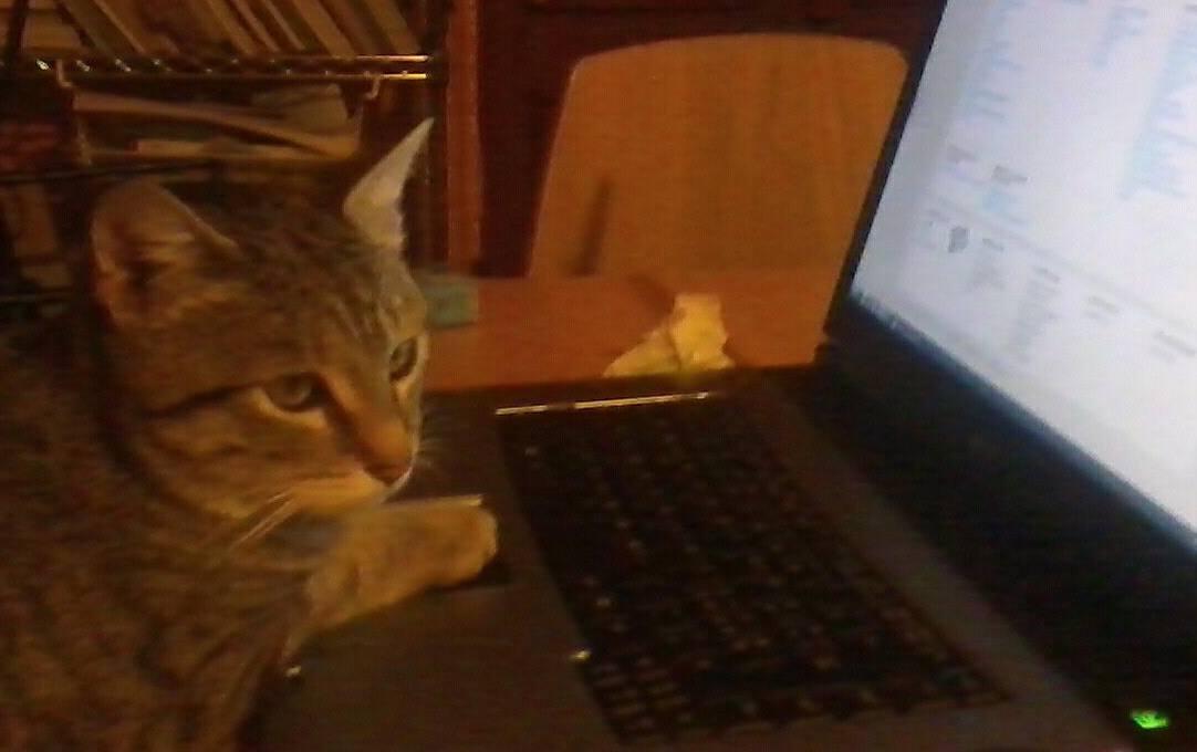 Giornata del Gatto, Oggi 17 Febbraio