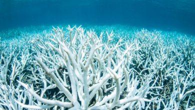 Photo of La Barriera Corallina sta morendo: gravi i danni del cambiamento climatico
