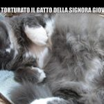 Gatto Scuoiato in Provincia di Brescia: Servizio Le Iene 26 marzo 2017