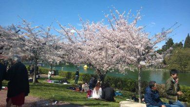 Photo of Ponte 25 Aprile 2017, dove andare in Italia?
