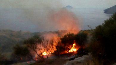 Photo of Rogo sul Gargano: incendi in zona Peschici e Vieste