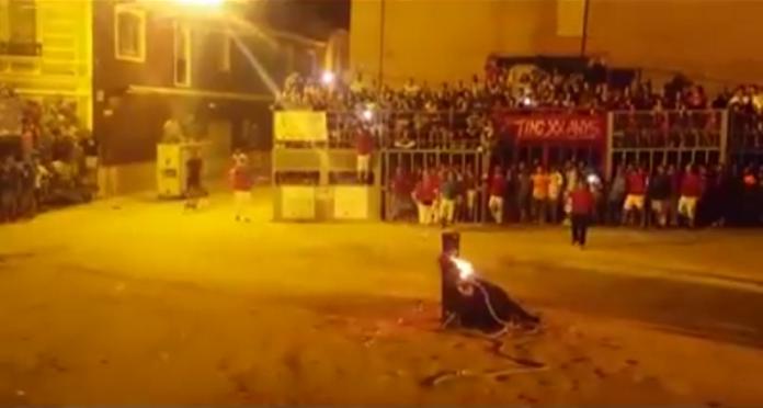 Danno fuoco alle corna del toro, l'animale si toglie la vita