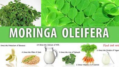 Photo of Moringa oleifera: proprietà e controindicazioni dell'albero miracoloso