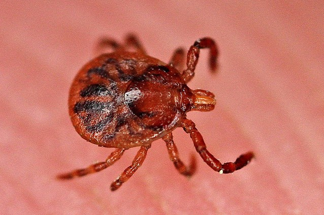 Malattia-di-Lyme
