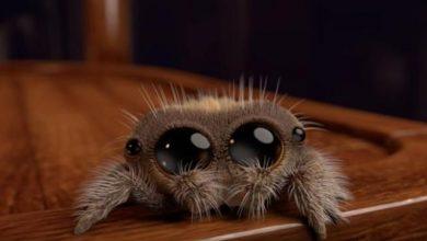 Photo of Lucas ragno del Pixar che ha conquistato il Web (VIDEO)