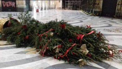 Photo of Sparicchio l'albero di Napoli non ha trovato pace