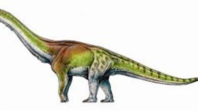 Photo of Al Museo Caffi di Bergamo arriva una mostra sui dinosauri