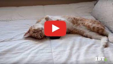 Photo of Musica per gatti rilassante su YouTube (Video)