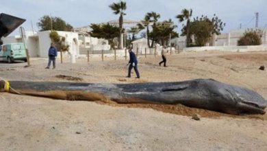 Photo of Capodoglio morto per aver ingerito plastica in Spagna