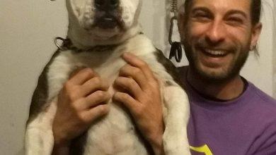 Photo of Ferito dal fratello e azzannato dal cane a Carrara