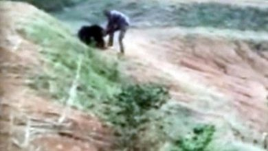 Photo of Uomo sbranato da un orso in India (Video)