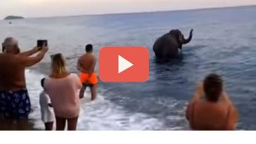 elefante in mare