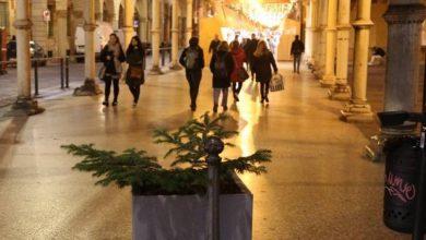 Photo of Albero di Natale a Bologna rubato come a Napoli