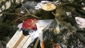 albero-natale-napoli-rubato