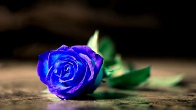 Photo of Rose Blu: Significato e Come si fanno
