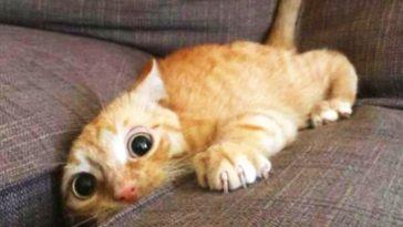 gattini immagini video