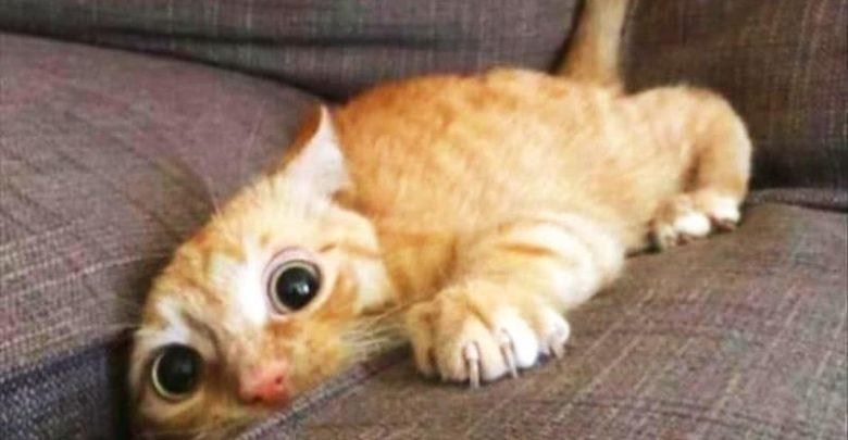 Gattini Immagini Foto E Video Tra Cuccioli Divertenti E Carini