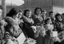 Photo of Fiore Mimosa: Significato e Perché si regala l'8 marzo