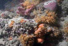 barriera corallina scoperta Puglia