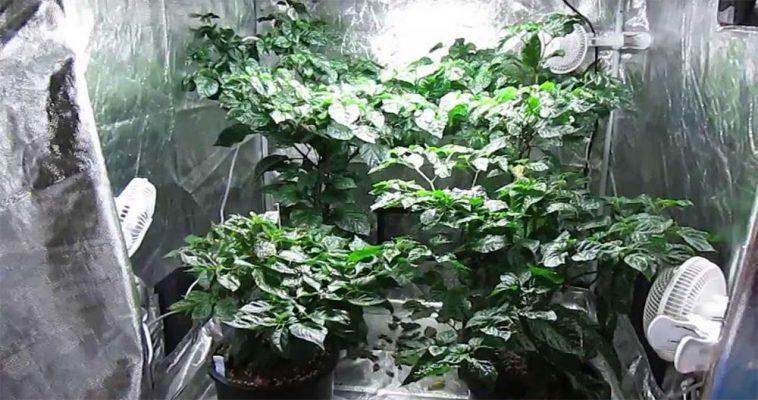 coltivazione idroponica indoor