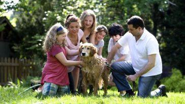 adottare animali