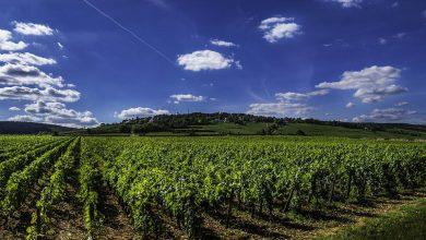 Photo of Borgogna: alla scoperta del territorio vinicolo più famoso di Francia