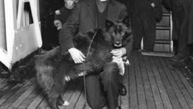 Photo of La vera storia di Balto, il cane protagonista del Film di animazione