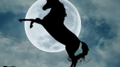 Photo of Gli unicorni sono esistiti davvero? Ecco la verità